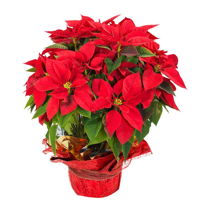 flores enviar: