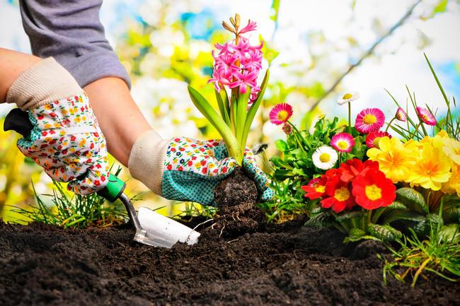 amantes de las plantas