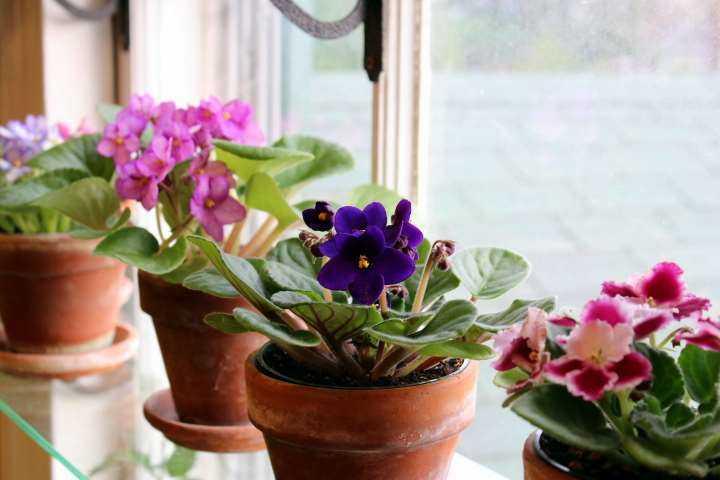plantas de interior para el invierno