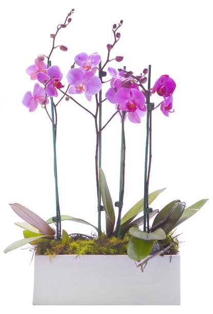 Cuidar las orquídeas en verano