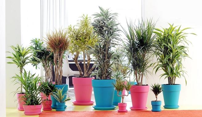 plantas que ayudan a  mejorar la calidad del aire