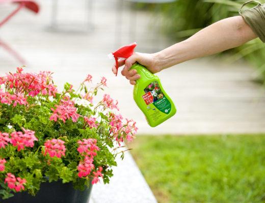 plagas de plantas