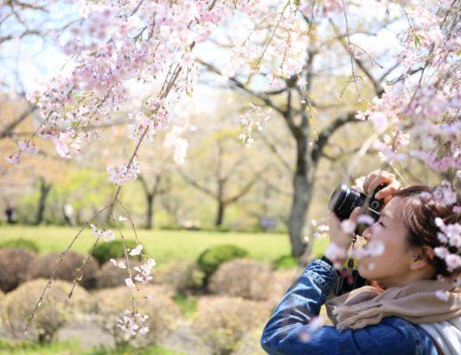 sacar fotos de flores