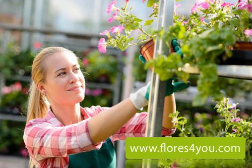 Rebaja IVA flores a domicilio